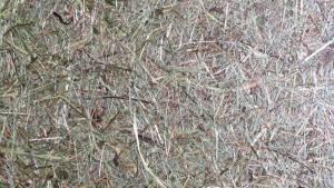 vitAcoustic带真正的干草和苔藓的声学图片 - 带竹框架的声学录音带和可更换的高度吸音的PET吸音板