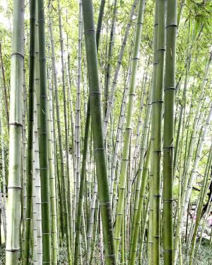 使用绿色竹材制造环保办公家具